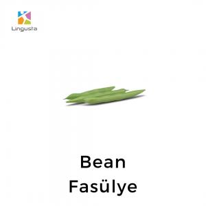 ingilizce bean fasülye