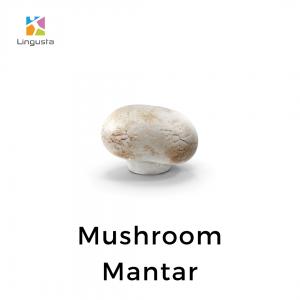 ingilizce mushroom mantar