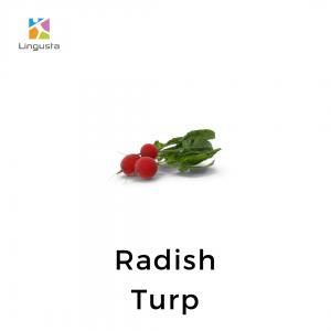 ingilizce turp radish