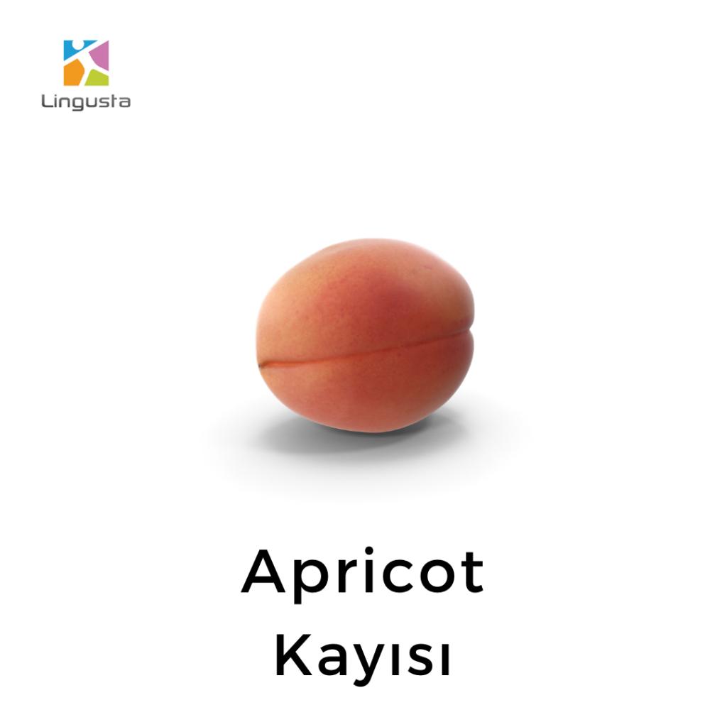 ingilizce kayısı apricot