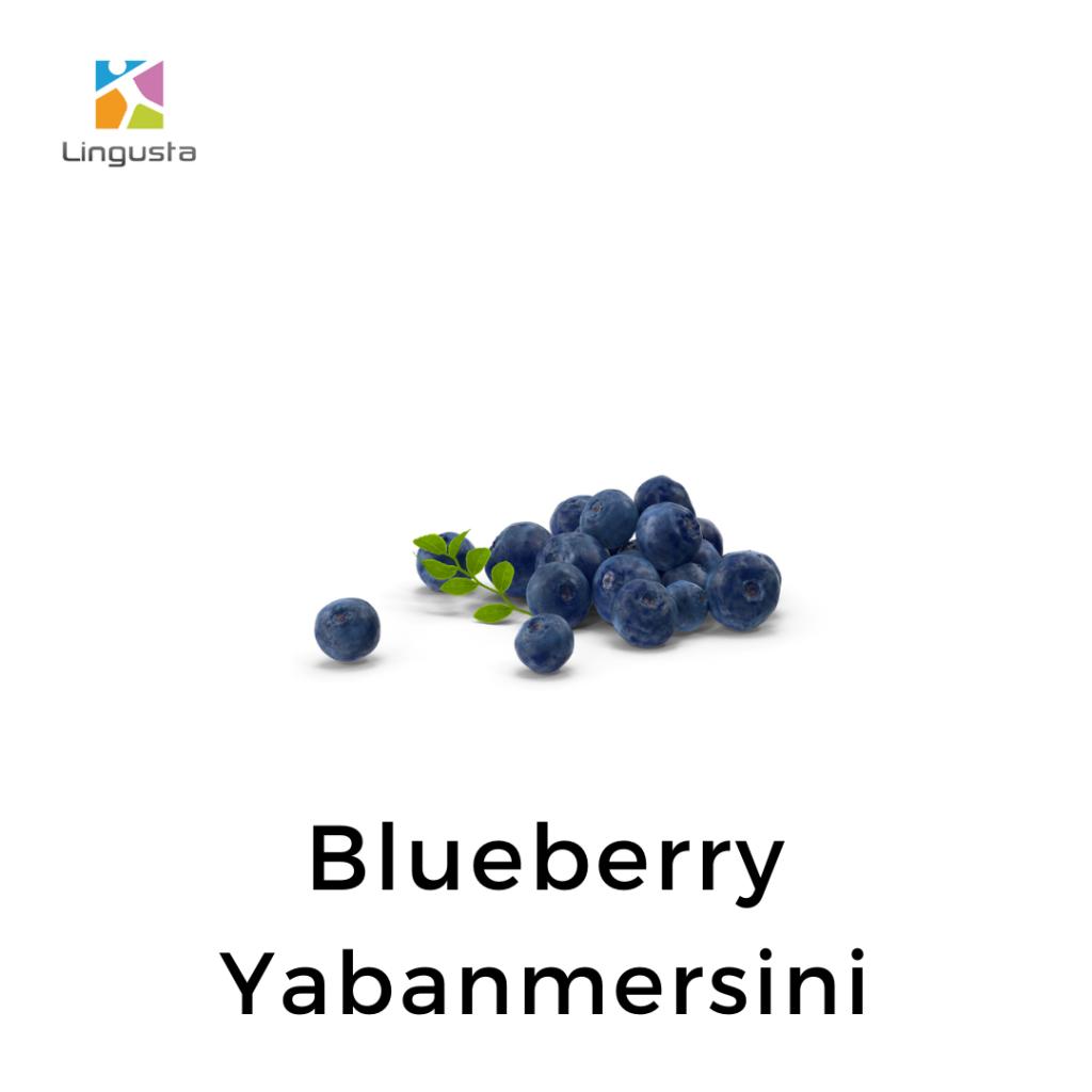 ingilizce yabanmersini blueberry