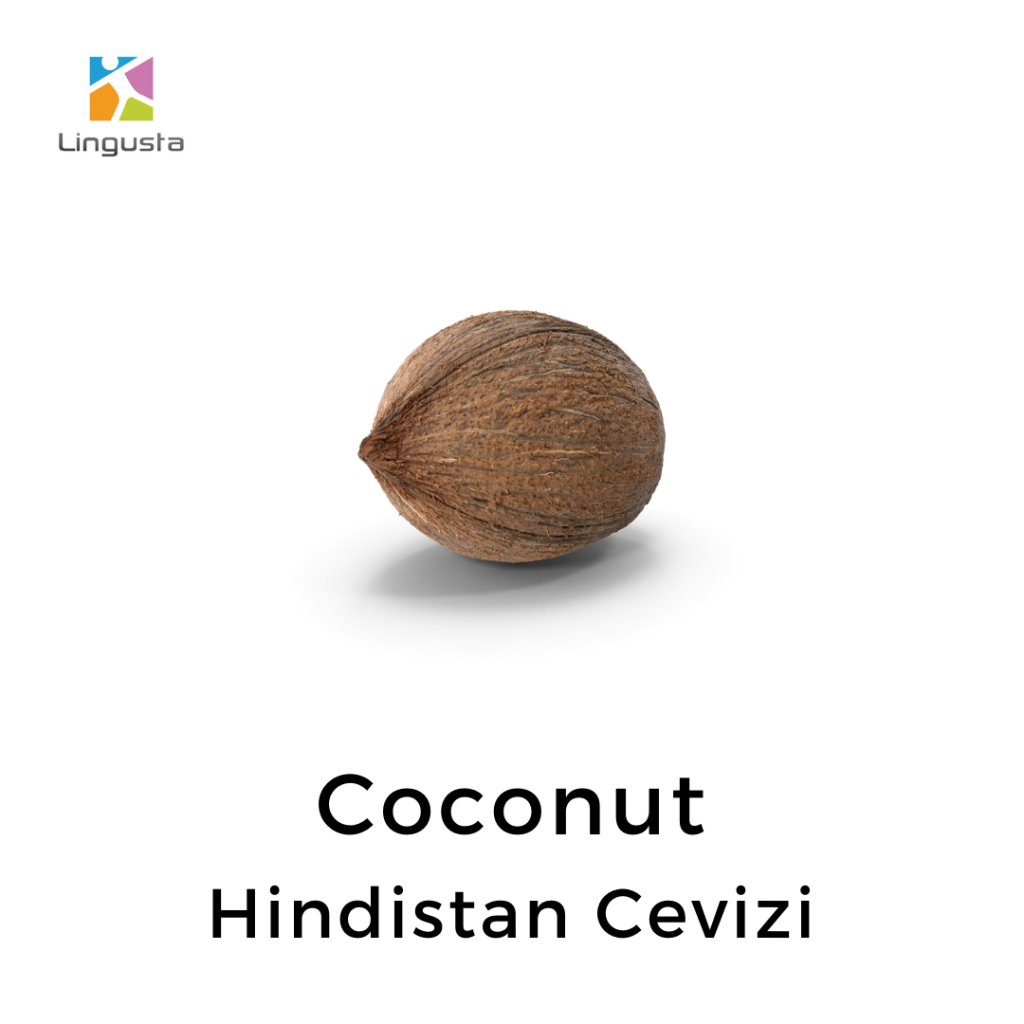 ingilizce hindistan cevizi coconut