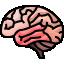 ingilizce beyin
